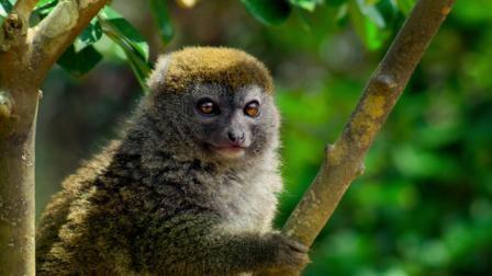 planet earth ii all episode download