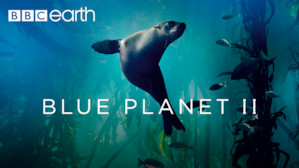 blue planet ii 4k download
